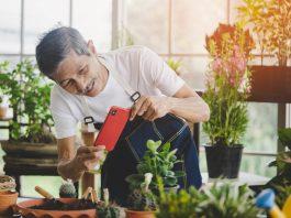 Cuidar-de-plantas